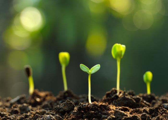 Een afbeelding van kiemplantjes die groeien